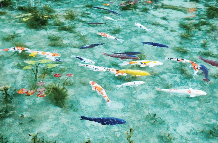 【日本の水風景】境内にモネの名画「名もなき池」