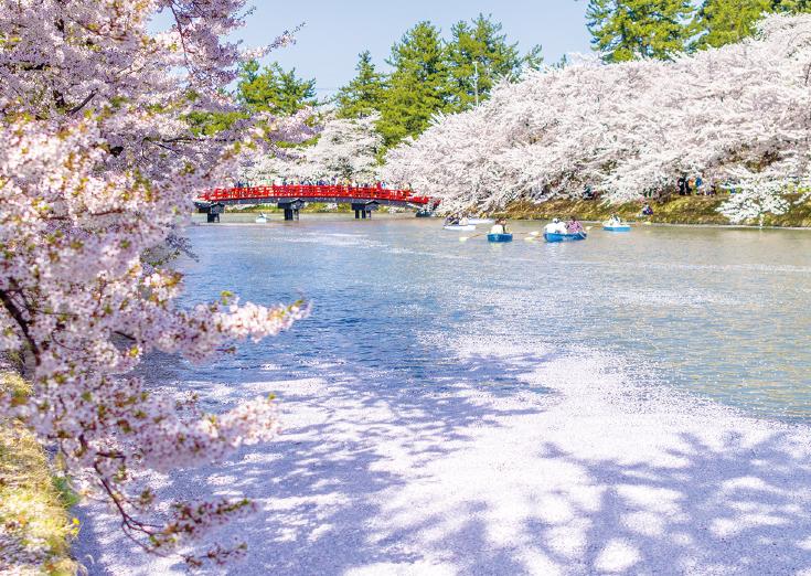 【日本の水風景】散った花びらが描く幸せなピンクの水面
