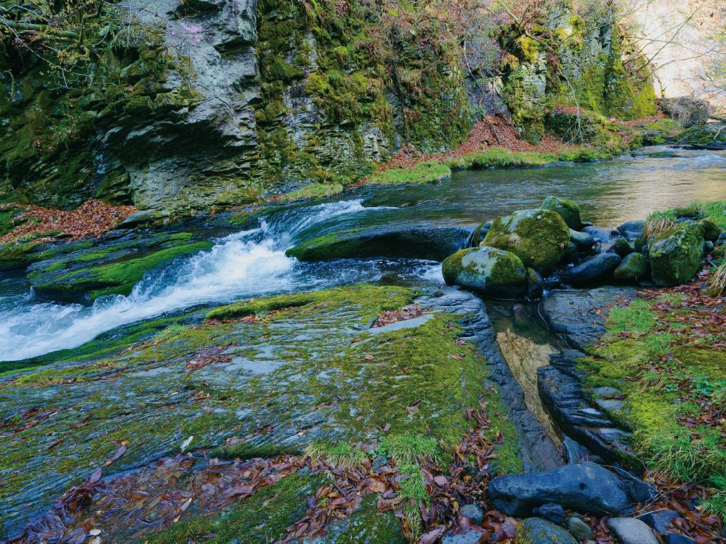 【特集】自然の川とおいしい水道水の、大切な関係
